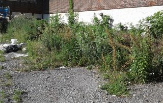 Weed filled brick building area